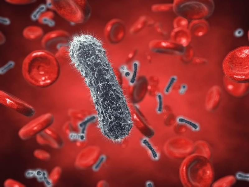 Посів крові на стерильність: показання, вартість дослідження 1