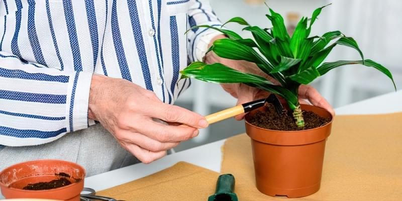 Чи можуть кімнатні рослини нашкодити здоров'ю? 2
