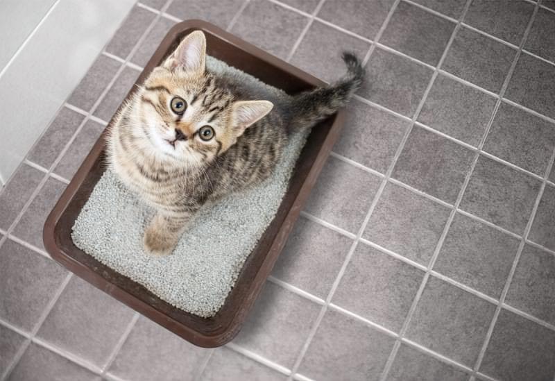 Алергія на шерсть: як ужитися з улюбленою кішкою? 3