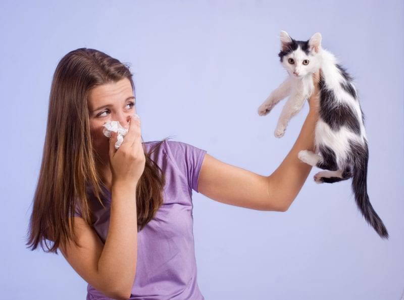 Алергія на шерсть: як ужитися з улюбленою кішкою? 1