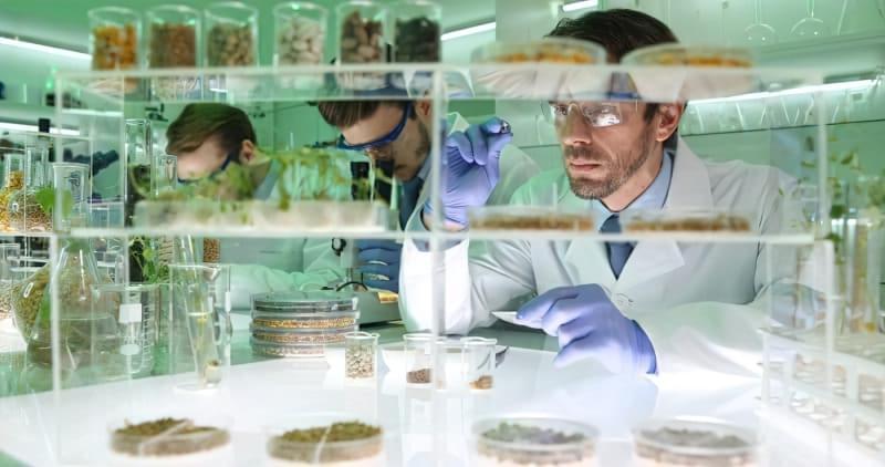 Проти природи: чи шкідливо їсти ГМО-продукти? 2