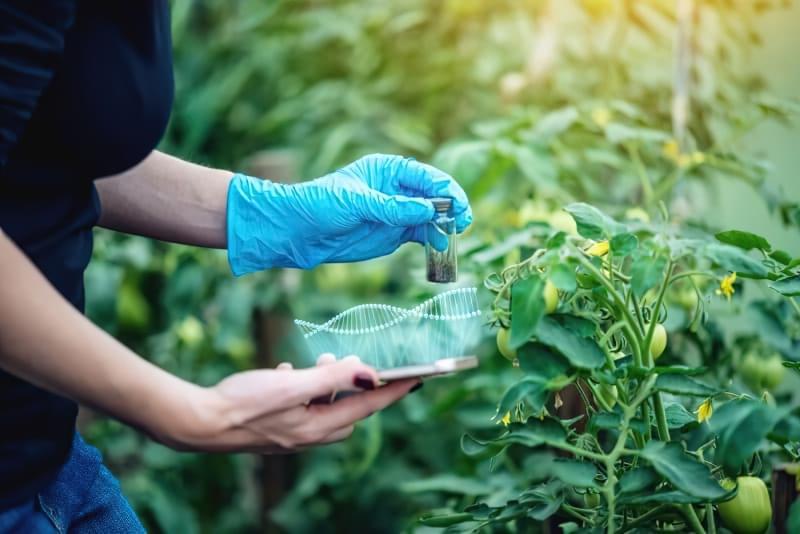 Проти природи: чи шкідливо їсти ГМО-продукти? 1