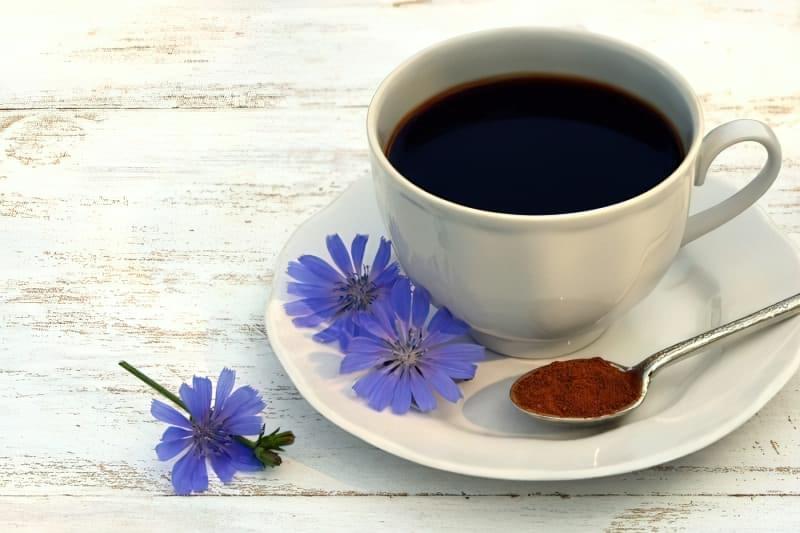 Заміна кави: чи корисний цикорій? 1
