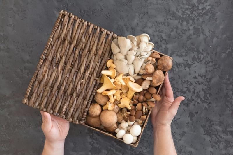 Як не отруїтися грибами? 2