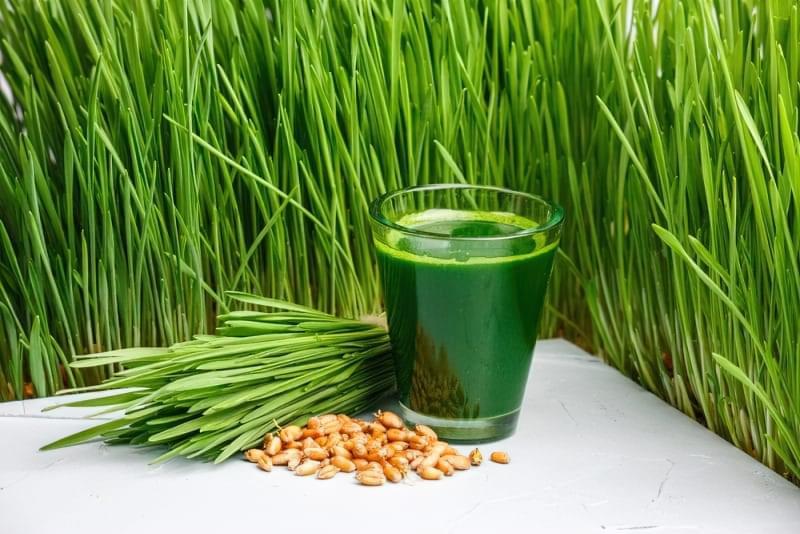 Вітграсс: чим корисний сік пророщеної пшениці? 1