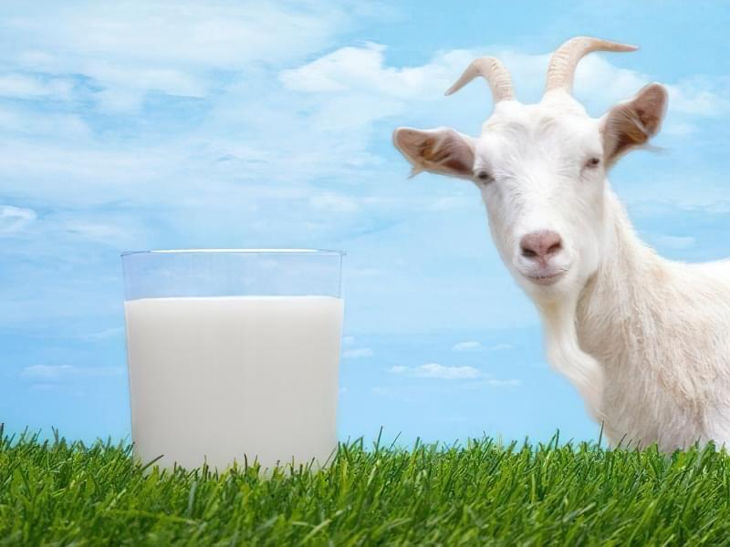Коров'яче, соєве або мигдальне: яке молоко корисніше? 1