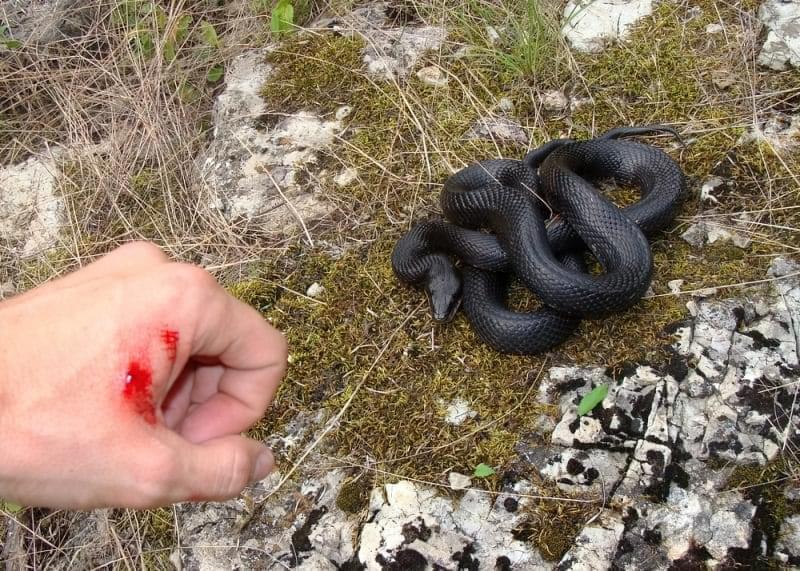 Змії: як їх уникнути і що робити після укусу? 1