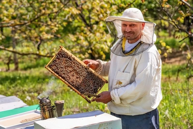 Що робити, якщо вас вкусила бджола? 3