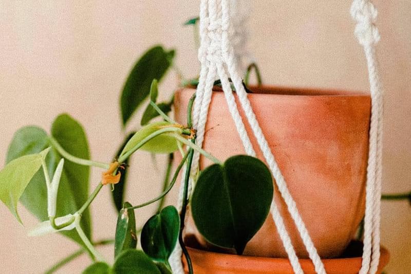 Кімнатні рослини не покращують якість повітря — і ось доказ 1