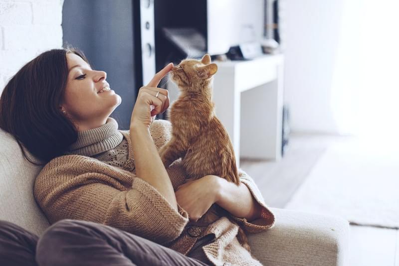 Лікувальні властивості кішок: міф чи реальність 2