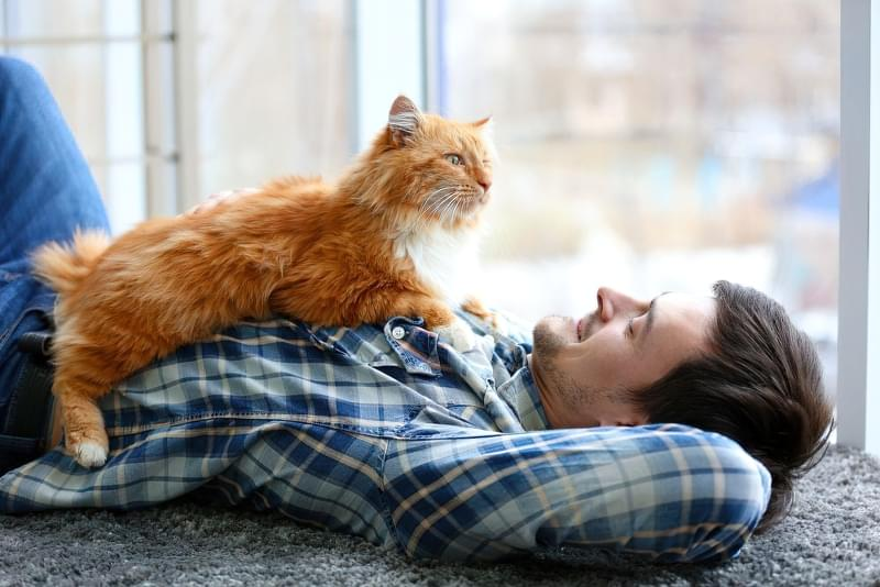 Лікувальні властивості кішок: міф чи реальність 1