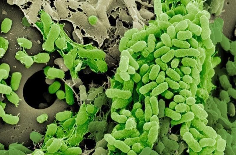 Як бактерії розвивають стійкість до антибіотиків і чому це так важливо 1