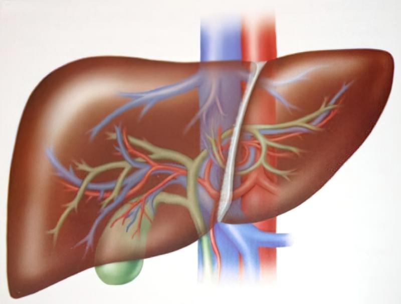 Гепаторенальний синдром: причини, симптоми і лікування 1